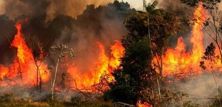 O significado do desmonte ambiental de Bolsonaro
